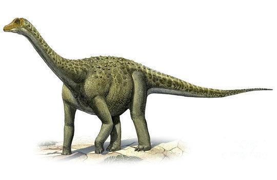 Палеонтологи СПБГУ описали титанозавра России