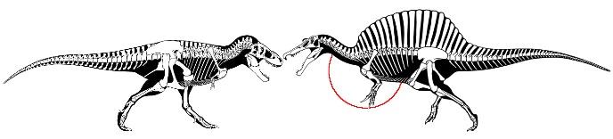 лапы спинозавра длиннее лап тирекса