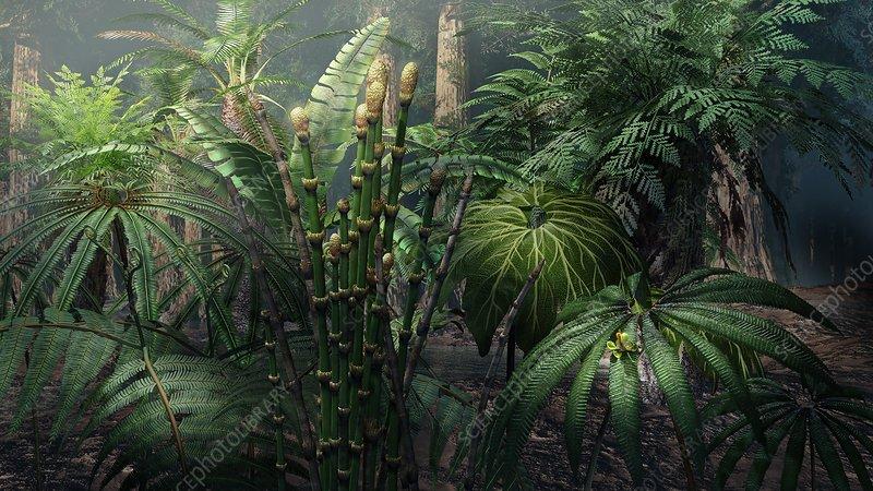 Растения юрского периода