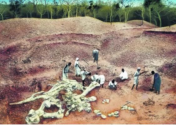 останки брахиозавра, найденные в Пластах Тендагуру, Танзания