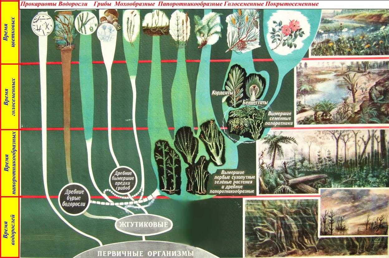 Эволюция растений