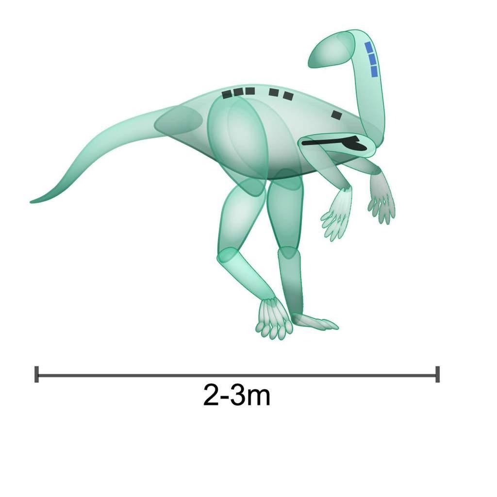 Нвходка плечевой кости динозавра