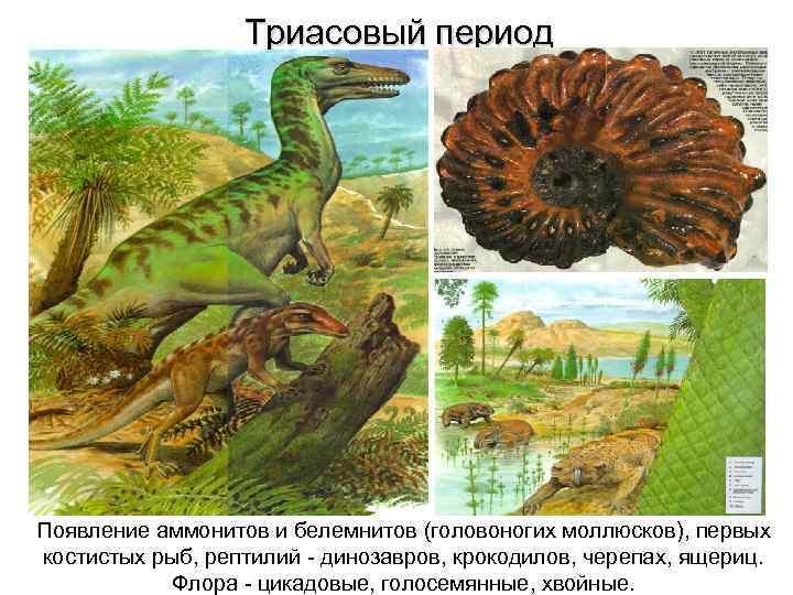 Флора и фауна триасового периода