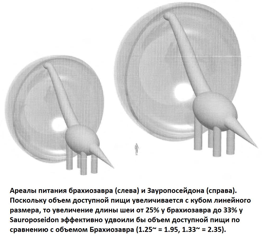 Ареал питания завропосейдона