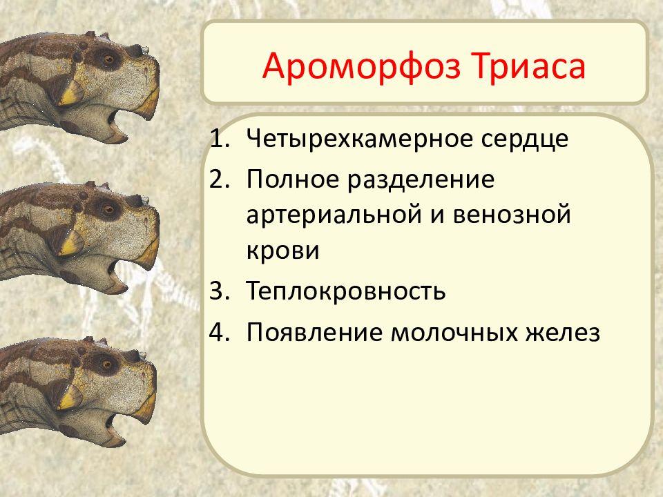 Ароморфозы триаса