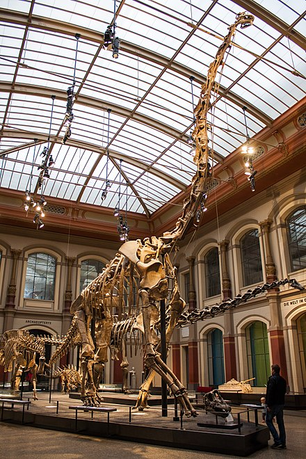 Реконструкция жираффатитана в музее