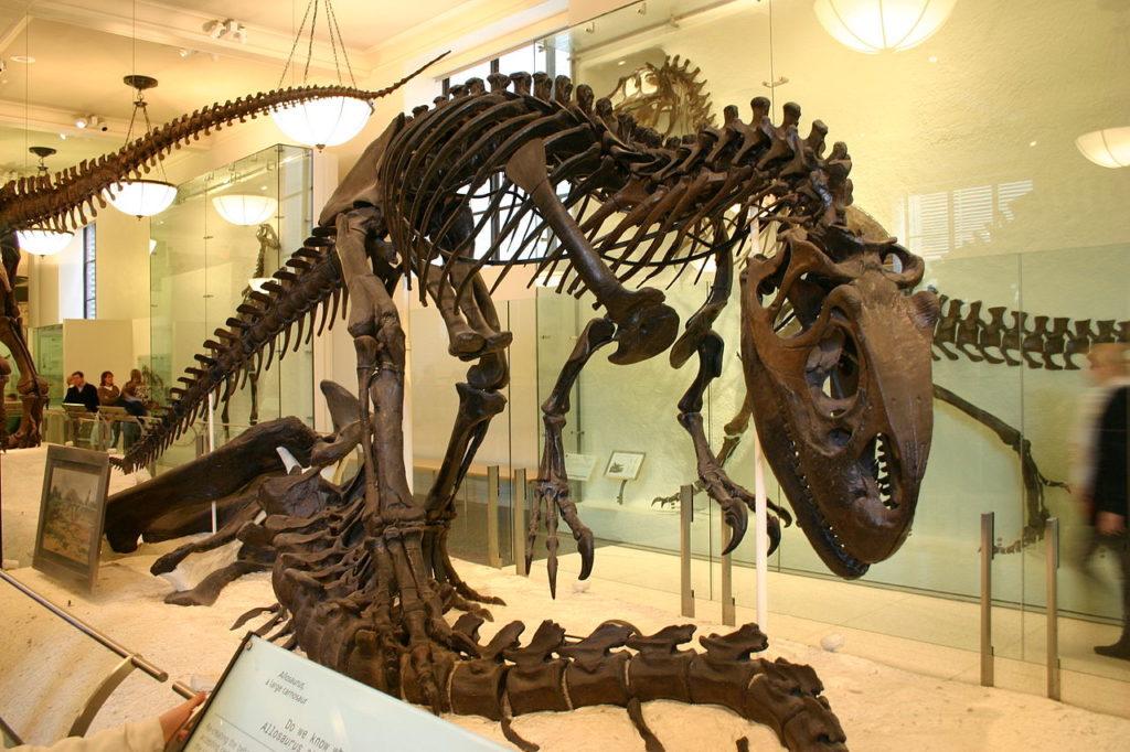 Реконструкция скелета аллозавра