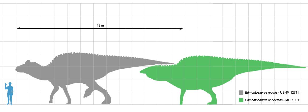 Сравнение Edmontosaurus reggalis и Edmontosaurus annectens