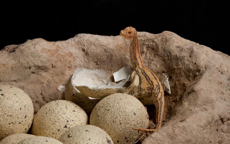 Яйца аргентинозавра