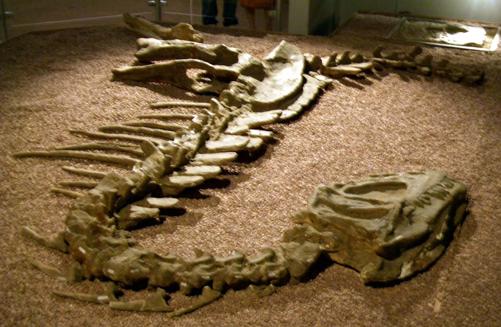 Скелет Yangchuanosaurus shangyouensis