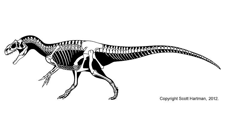 Кости скелета аллозавра