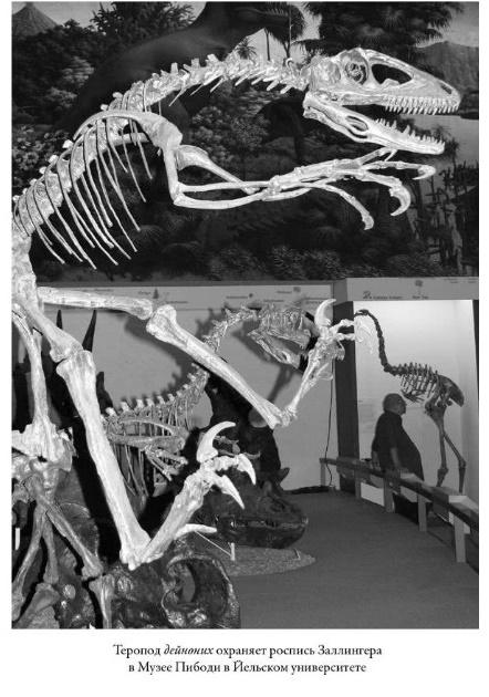 Реконструкция скелета дейнониха в музее Пибоди