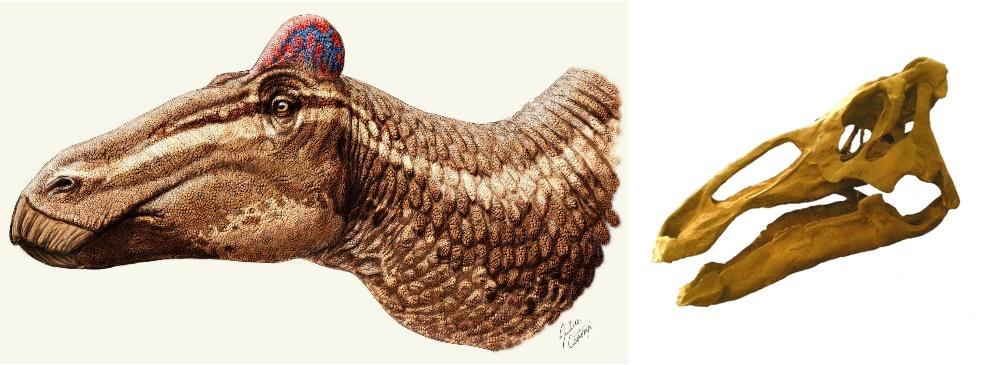 Голова эдмонтозавра