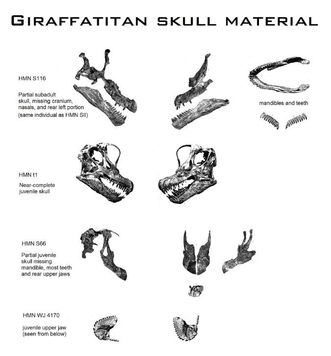 Найденные черепа жираффатитана