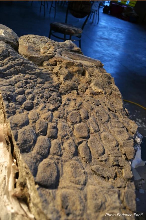 Кератиновый покров на морде эдмонтозавра