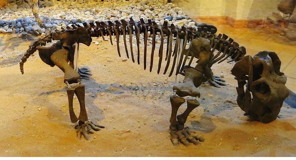 Скелет листозавра в музее