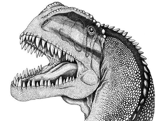 Череп янхуанозавра