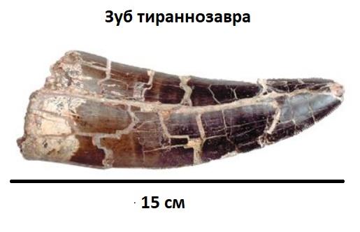 Коронка зуба тираннозавра