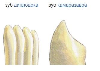 Зубы диплодока