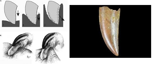 Принцип укуса плотоядных динозавров
