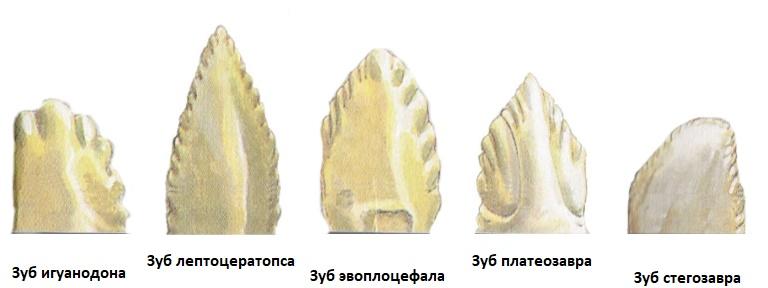 Зубы динозавров в виде ножей