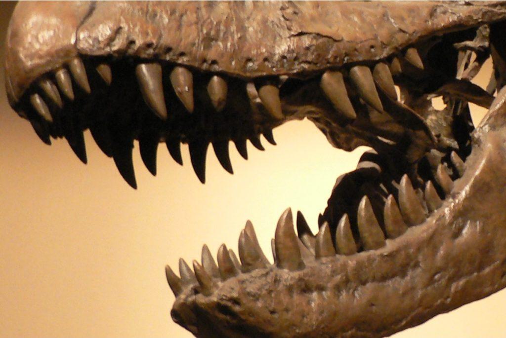 Зубы тираннозавра