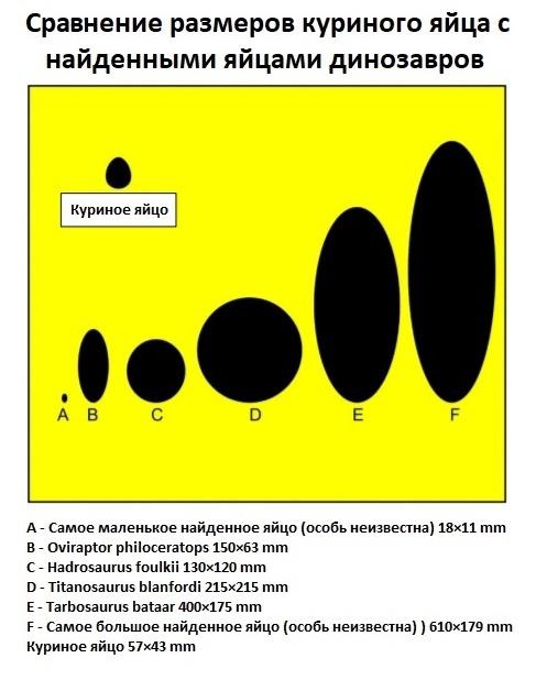 Сравнение размеров яиц динозавов