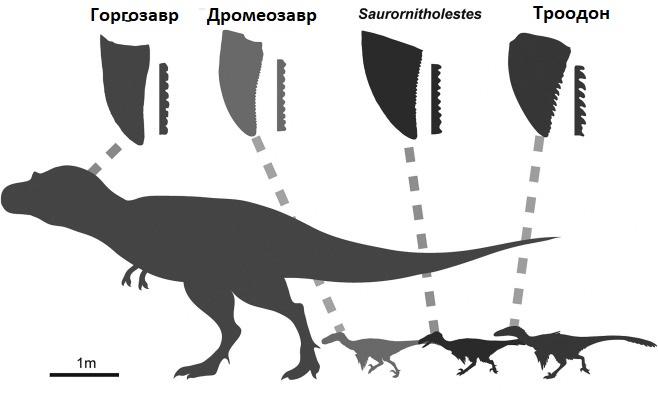 Зубы хищных тероподов