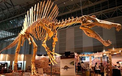 реконструкция скелета спинозавра