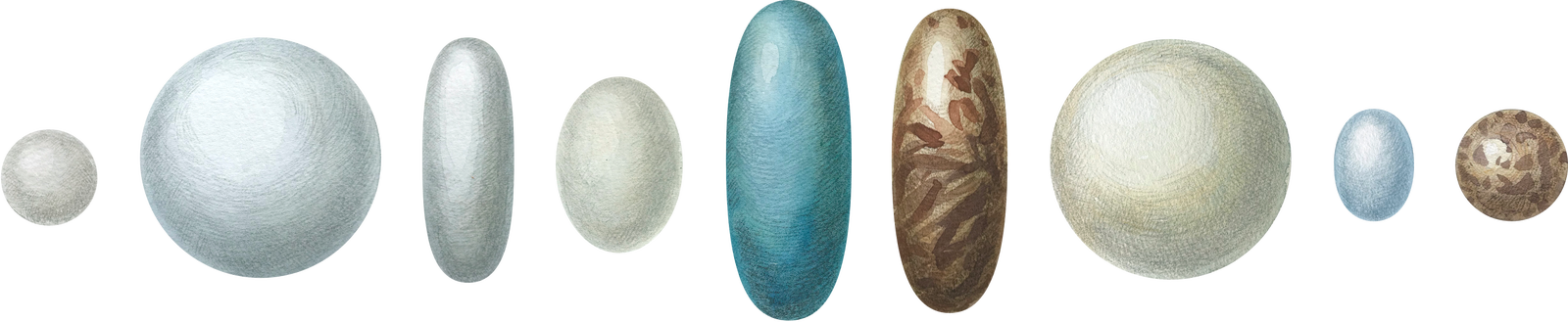 Цвет скорлупы яиц