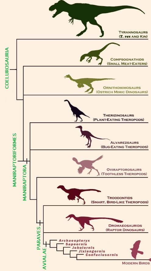 Эволюция тероподов