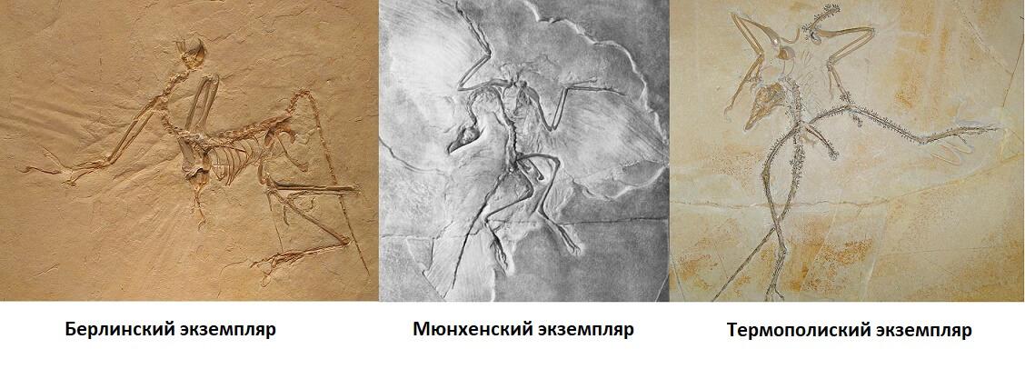 Найденые останки археоптерикса