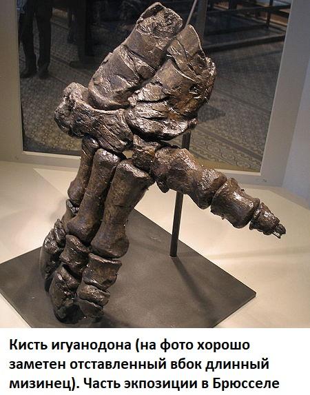Кисть игуанодона с отставленным большим пальцем и шипом