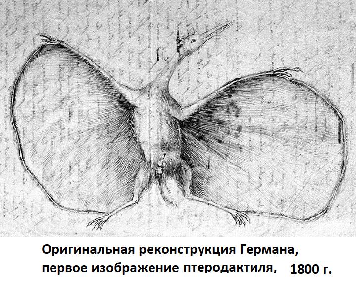Первое изображение птеродактиля