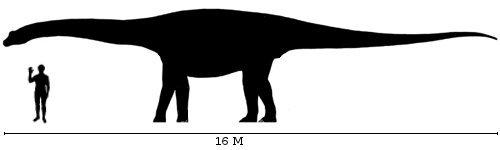 Размер Египтозавра в сравнении с человеком