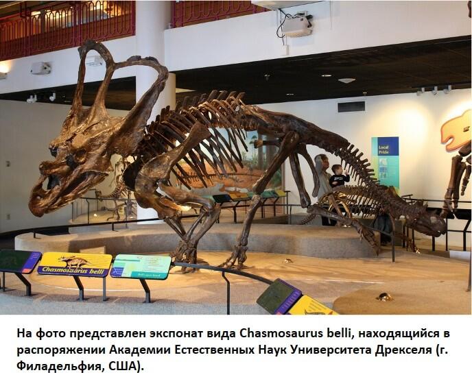 Хасмозавр в музее академии естественных наук
