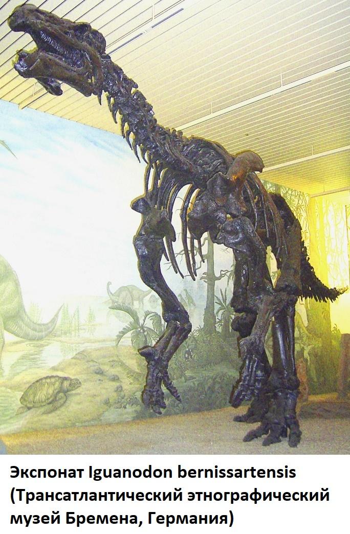 скелет Игуанодона в музее Бремена