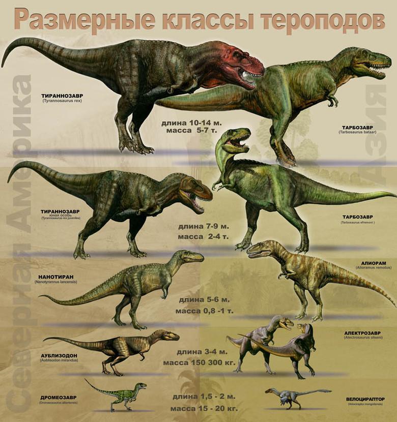 Размеры теропод сильно варьировались (от 50 см до 15 метров)