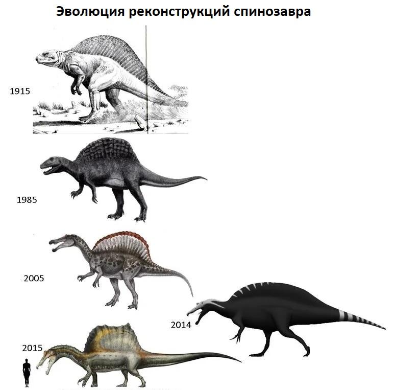 Изменения представлений об анатомии спинозавра
