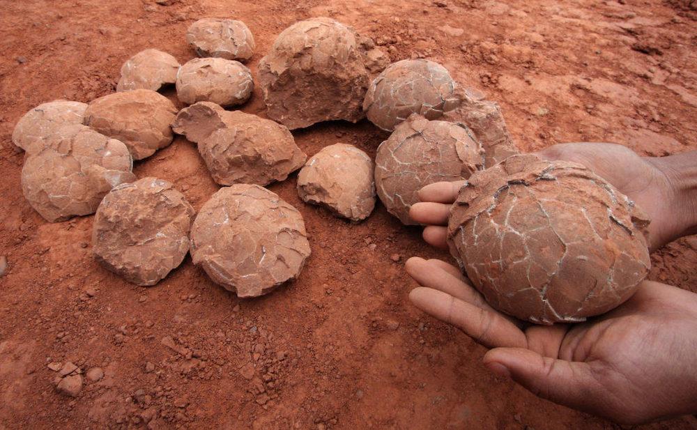 Найденные на раскопках яйца динозавров