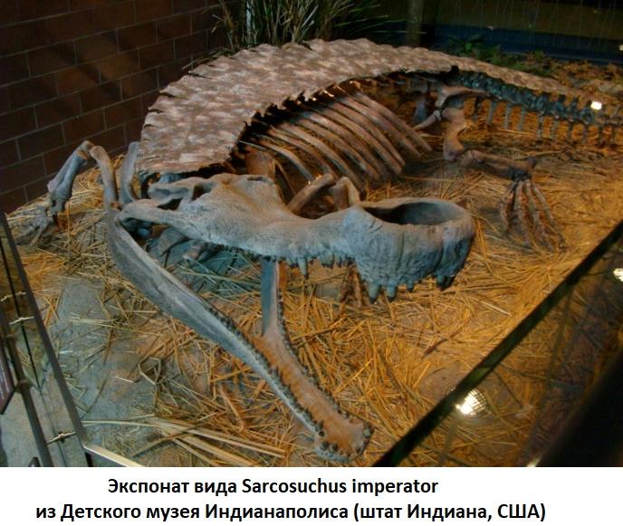 Скелет саркозуха в музее Индианаполиса