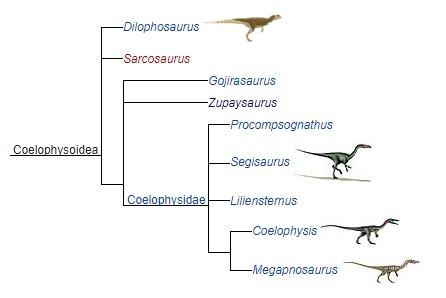 Семейство целофизид и его представители