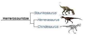 Семейство герреразаврид и его представители