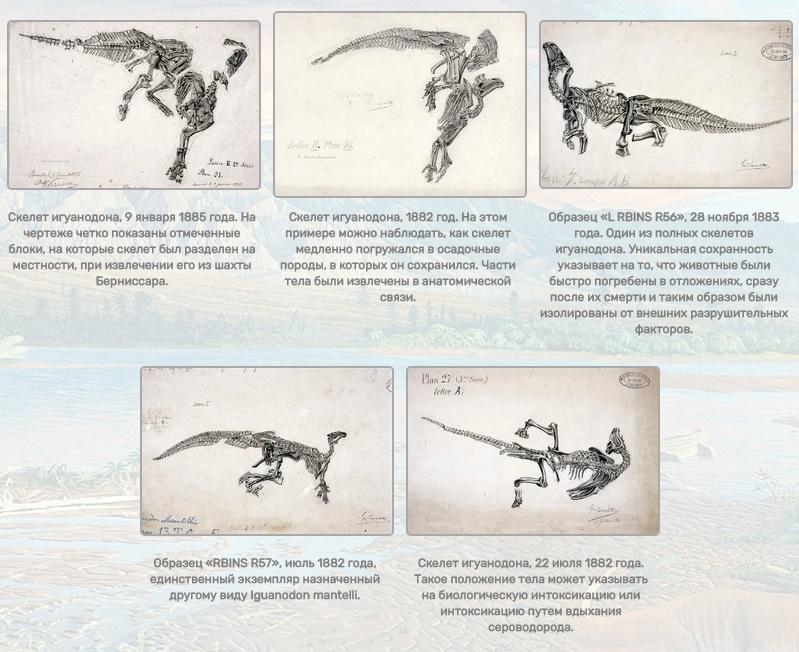 skeleti_iguanodona