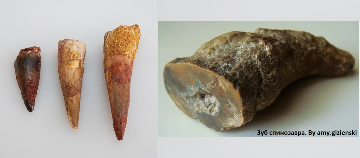 Зубы спинозавра