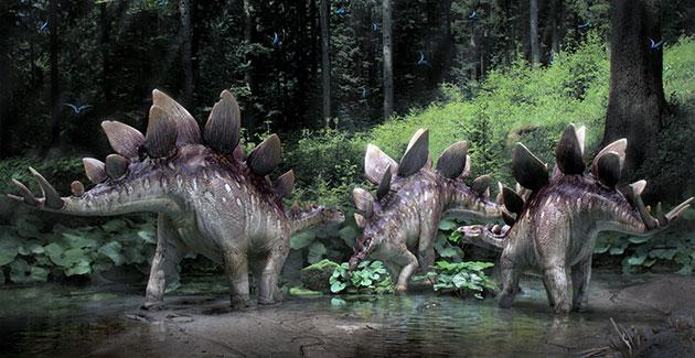 Питание стегозавра