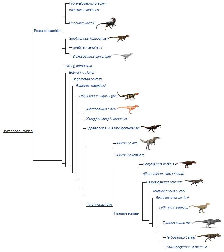 Надсемейство tirannozavridae