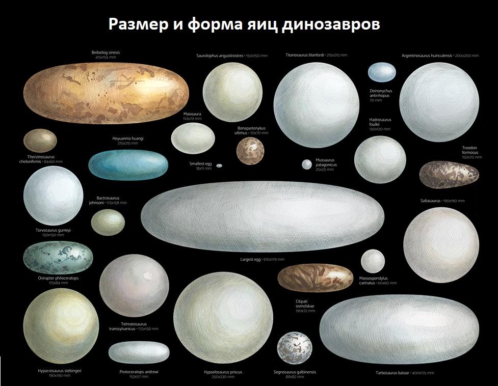 Цвет, размер и форма яиц динозавров