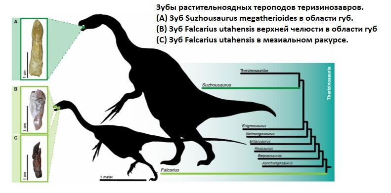 Зубы растительноядных динозавров