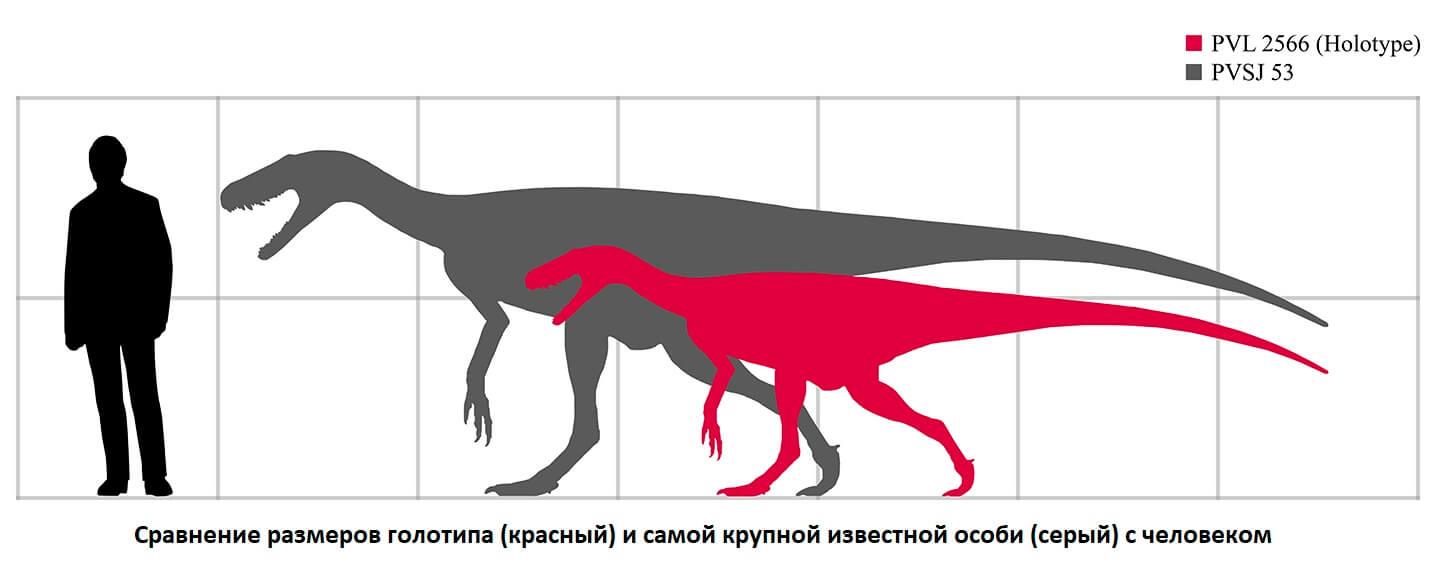 Сравнение голотипа герреразавра и крупнейшей найденной особи